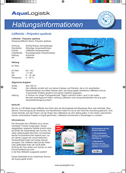 Steckbrief Löffelstör Downloads
